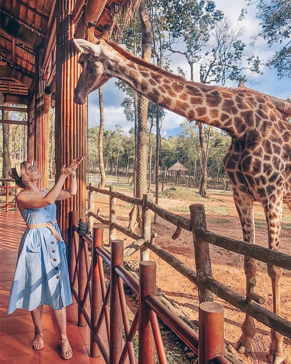 Hưu cao cổ tại khu vườn thú mở