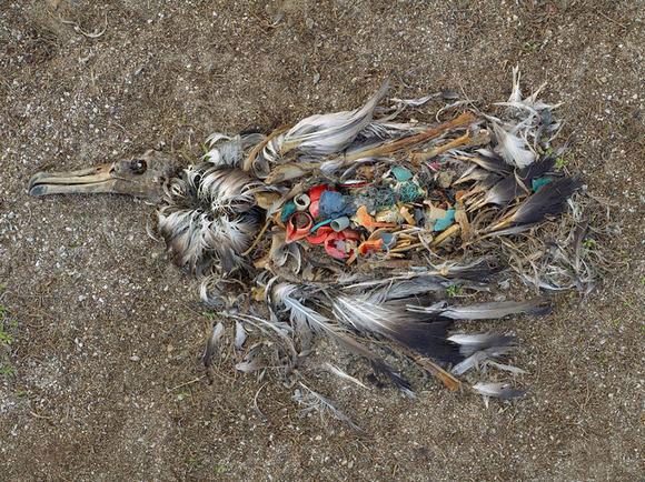 Bạn sẽ không xả rác bừa bãi nếu nhìn thấy những hình ảnh này